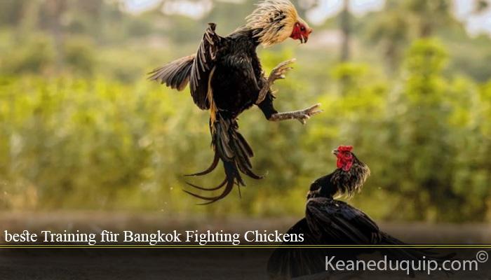 beste Training für Bangkok Fighting Chickens